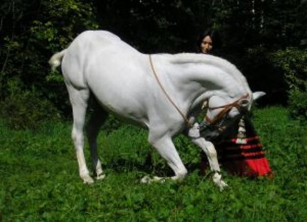 Galopejunior: Los músculos del caballo