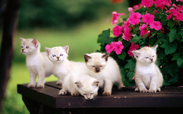 Here Below Published Some Beautiful Wallpapers You Can Download And Set On Your Walls Backgrounds These Are Pictures Of Cute Cats