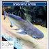 מחירון כרישי פארון