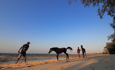 Kuda-kuda di pantai Cemara Sumba Timur