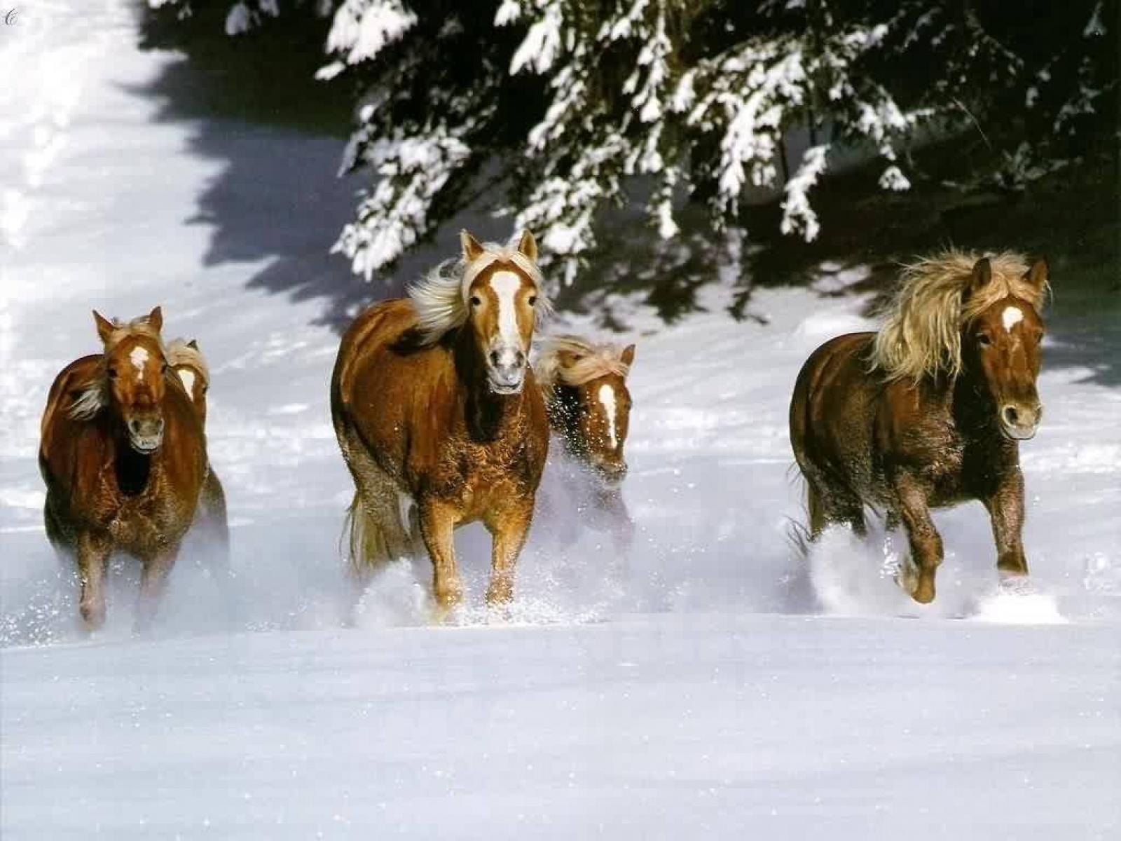 animals horse running free - photo #15