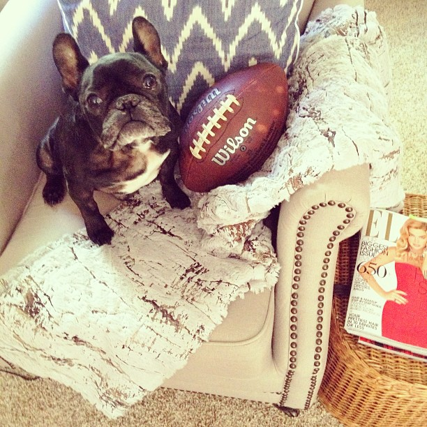 Frenchie, dog, Football