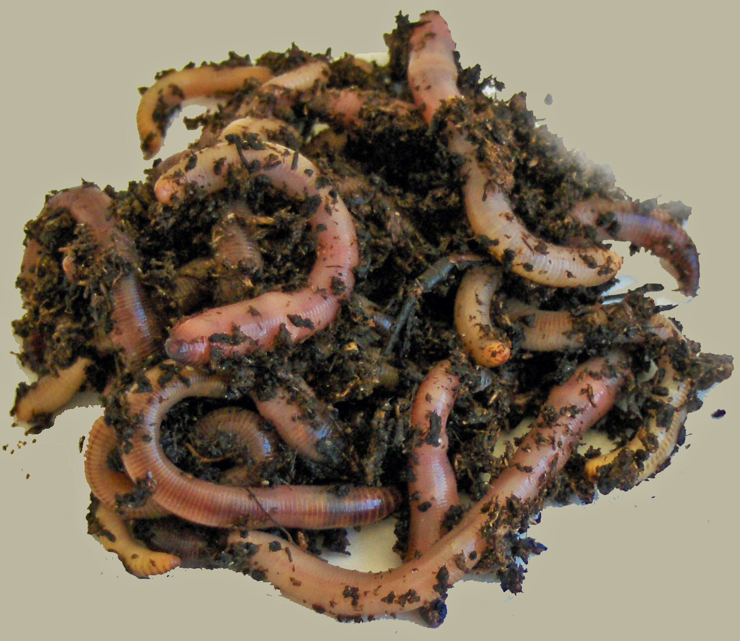 Earthworms are good for your garden.  Add some today.