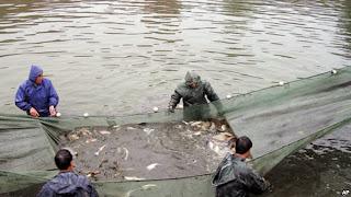 china fish