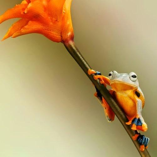 02-Wil-Mijer-Frog-Macro-Photography-www-designstack-co