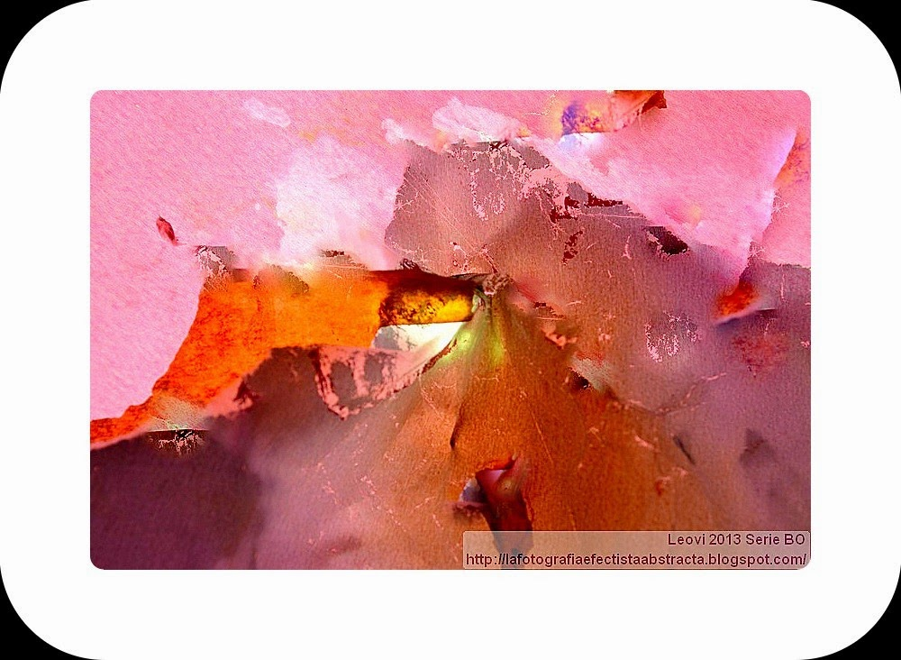 Foto Abstracta 3220  Bajo un cielo de pétalos de rosa - Under a sky of rose petals