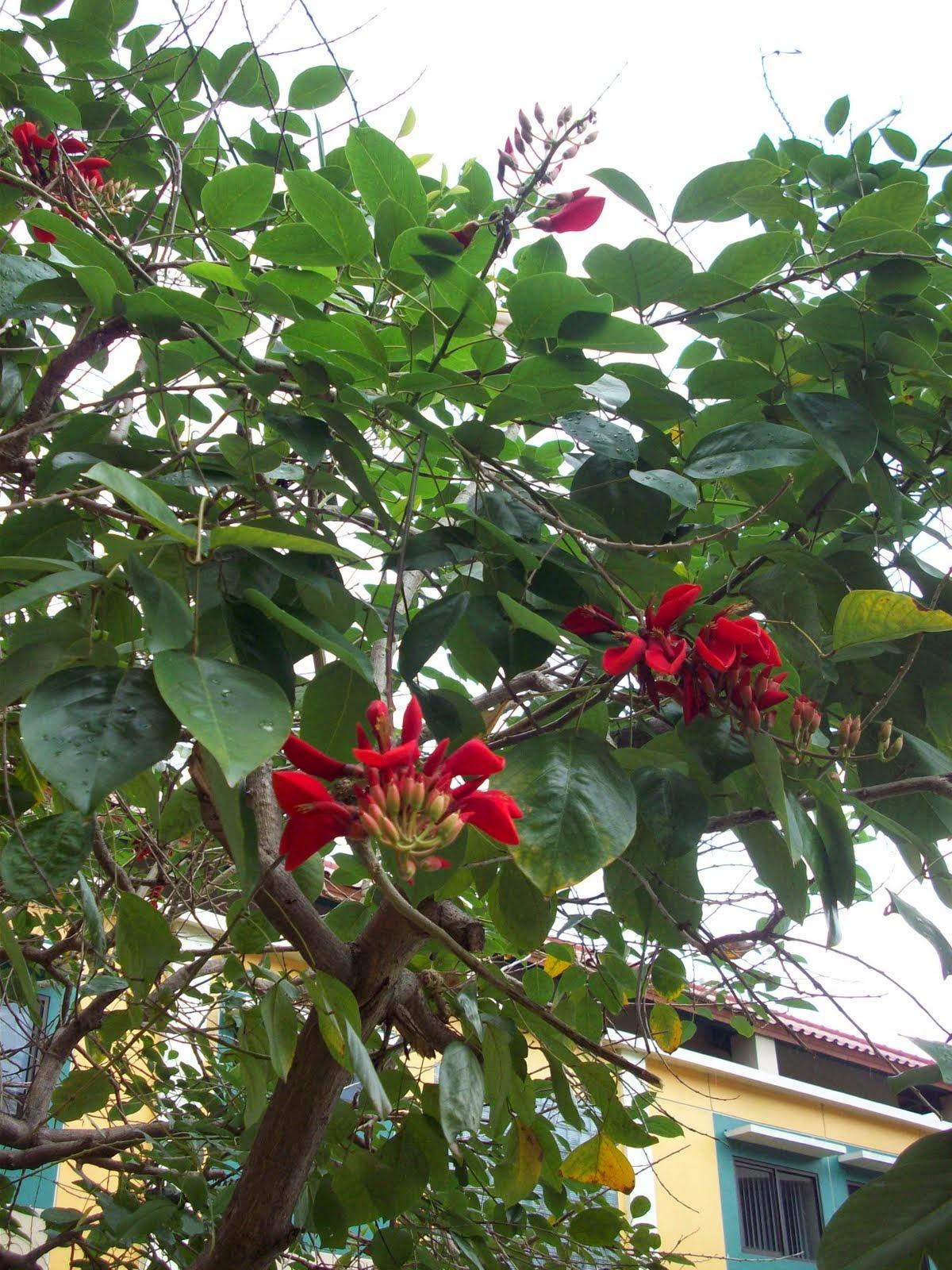 Tips memilih tanaman sehat | tanaman bermanfaat | tanaman bunga | tanaman hias | tanaman peneduh | suplier tanaman | jasa desain taman