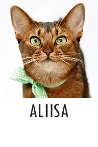 Aliisa