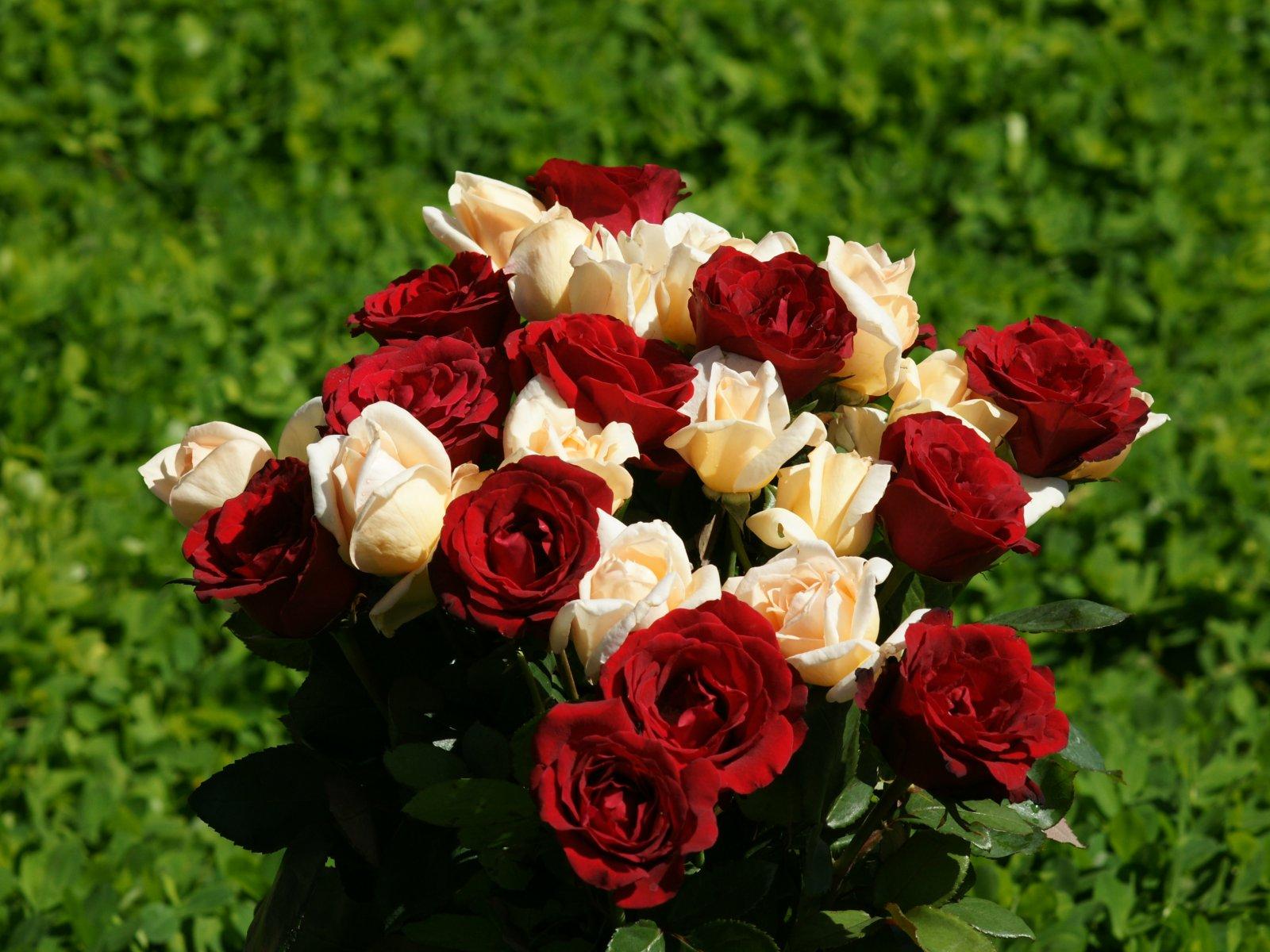 Top Red Rose HD Wallpaper Image