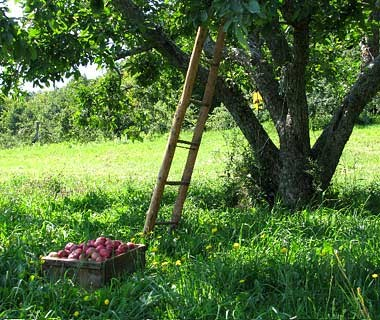 after apple pickings After apple-picking is a poem by american poet robert frost it was published in north of boston, frost's second poetry collection.