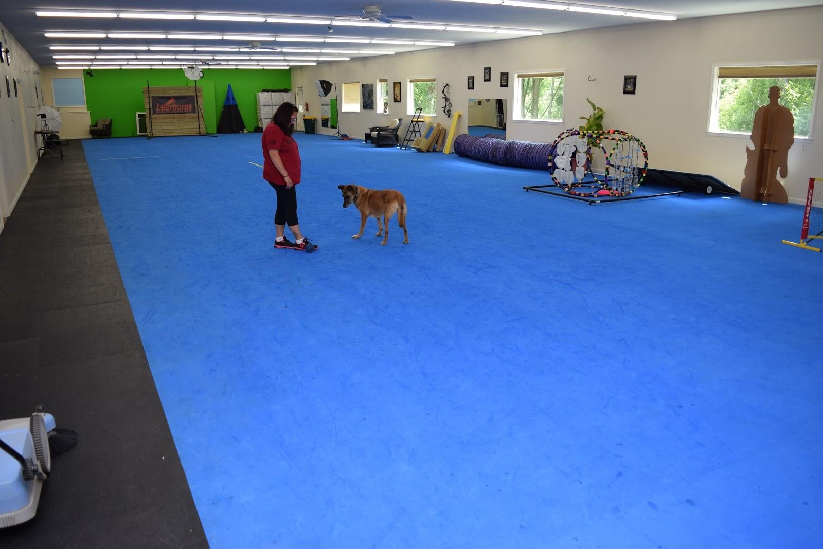 dog decoration sensational flooring photograph design floor ideas depot floors mat elegant home