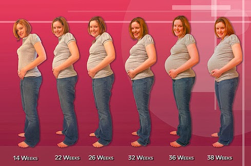 Pregnancy Step by Step | Pregnancy Step