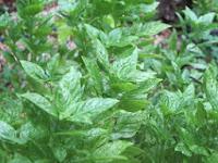 Herbario Domestico
