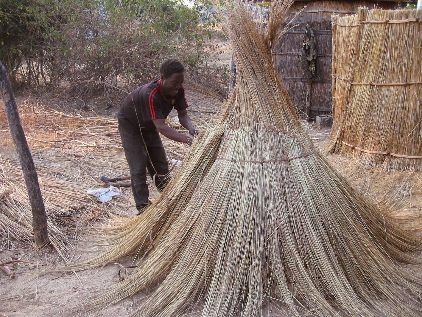 Making a grass hut