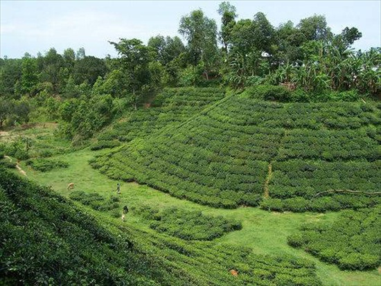 Tourism Place In Bangladesh All Tourism Places Of Bangladesh Sylhet