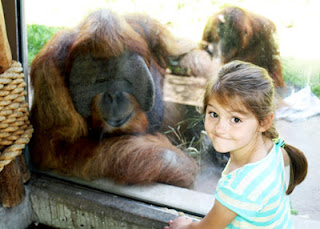 Tessa viewed one of the orangutans that like to hang out by the windows of the Fragile Forest exhibit up close.