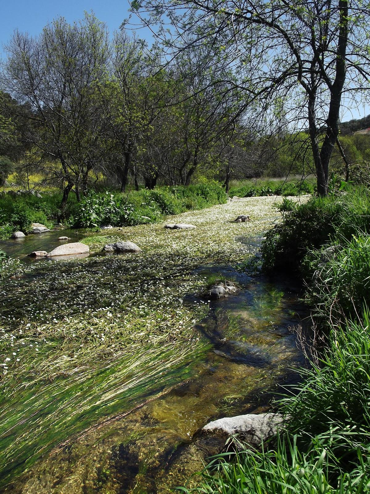 rio perales lleno de flores