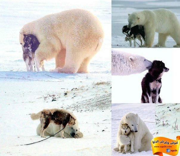 أغرب الصداقات في العالم بين الحيوانات