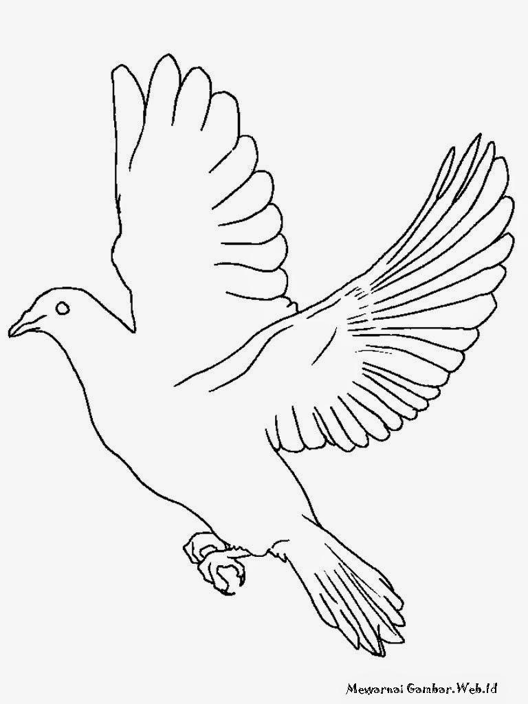 Lembar Mewarnai Gambar Burung Merpati