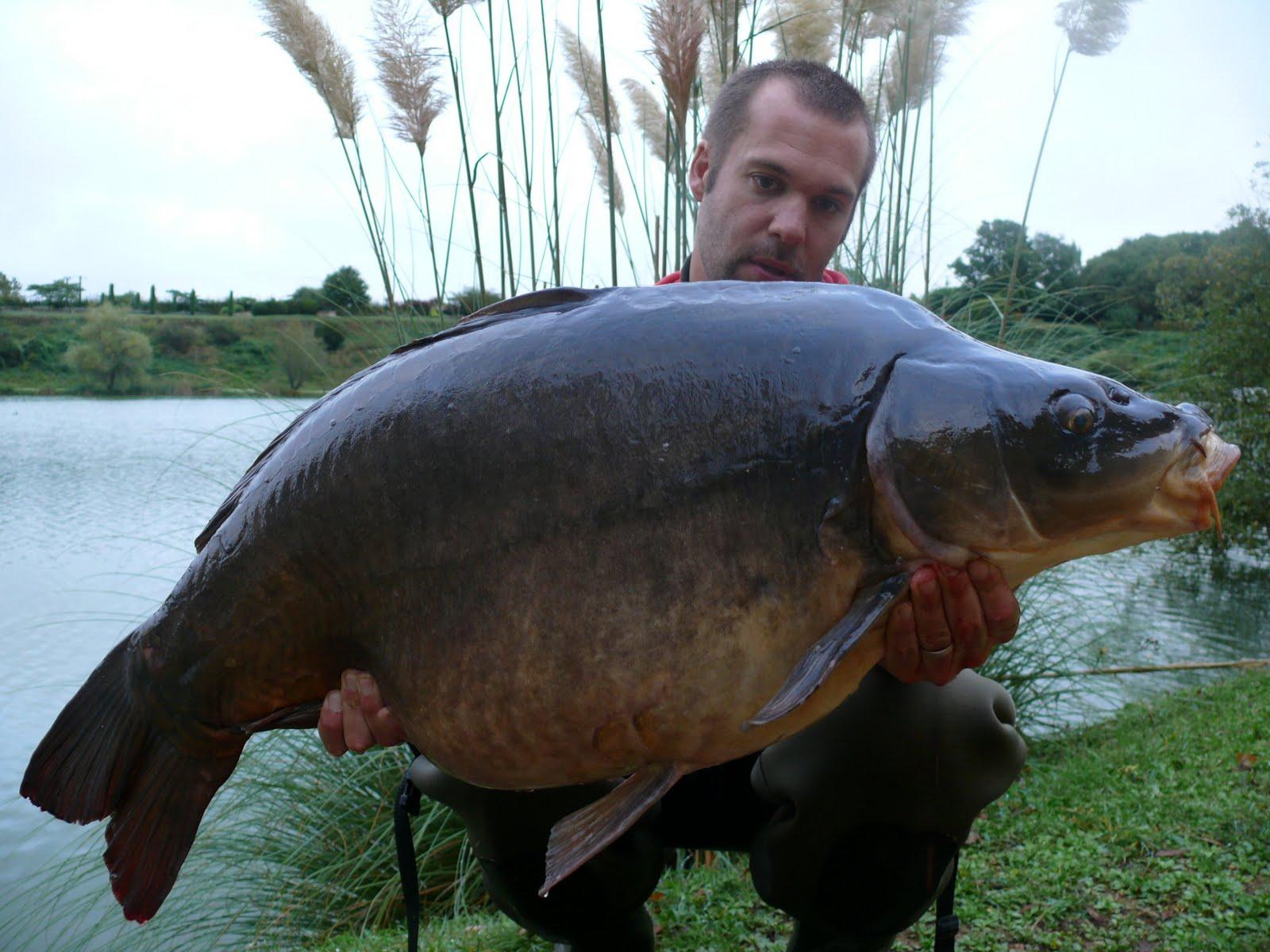 Jerome herve blogs gros poisson au programme for Gros poisson rouge