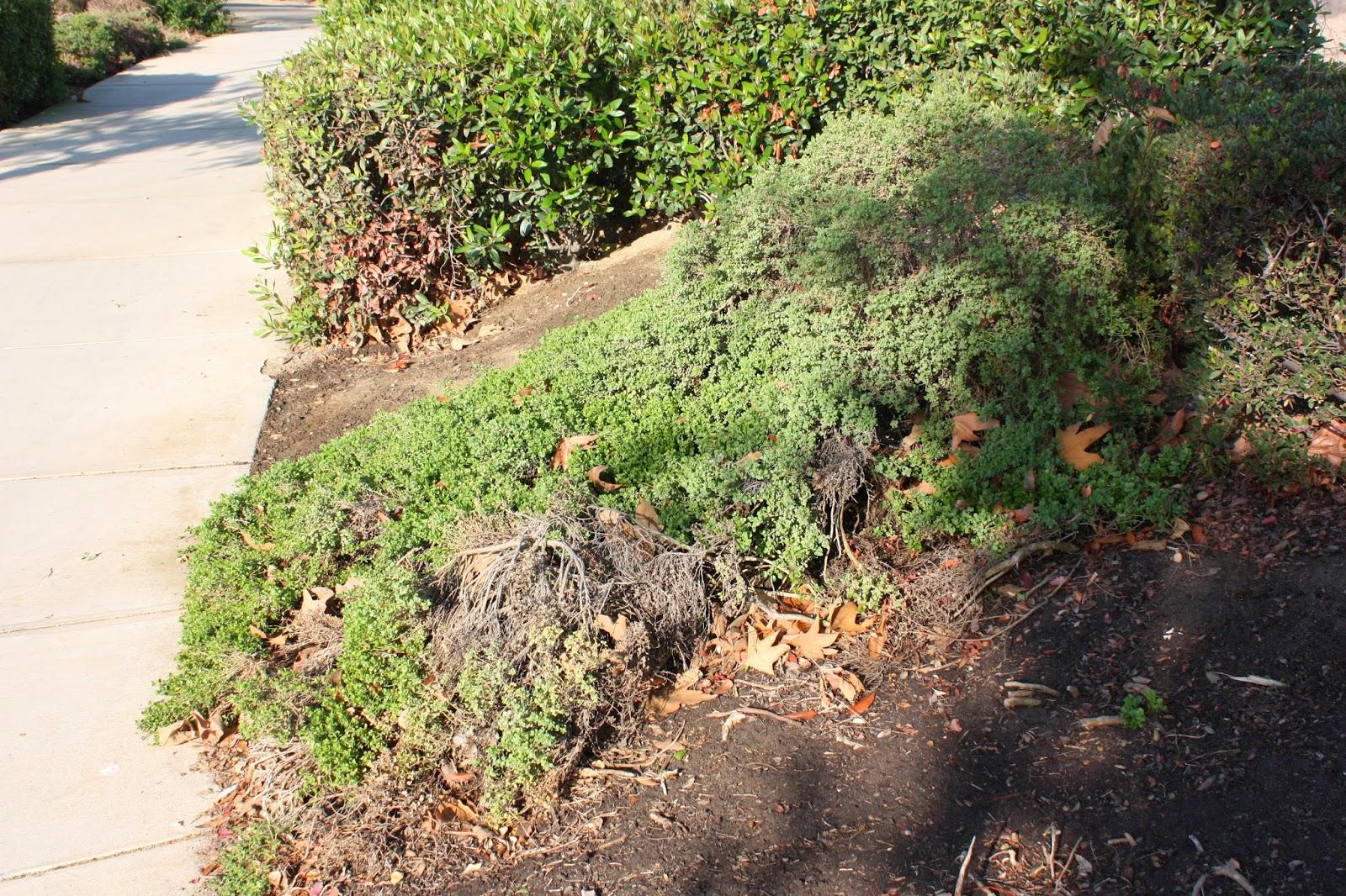 Bakersfield Native Garden