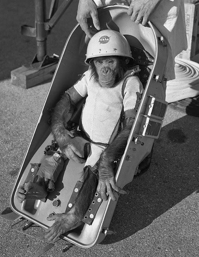 Ham el chimpancé en la misión Mercury 2