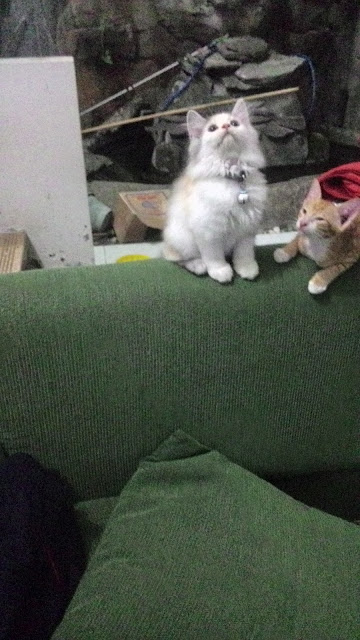 foto-kucing-imut_08