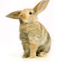 Bunny  :3