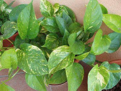 Cosas utiles cuidados para tus plantas de interiores - Plantas de interior cuidados ...