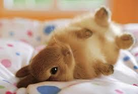merawat_kelinci