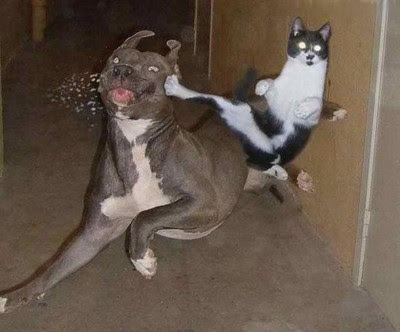 Dogscatswallpaper on Cat Kicks Dog 12362 Funny Cats And Dogs Pics S400x332 49222 Jpg