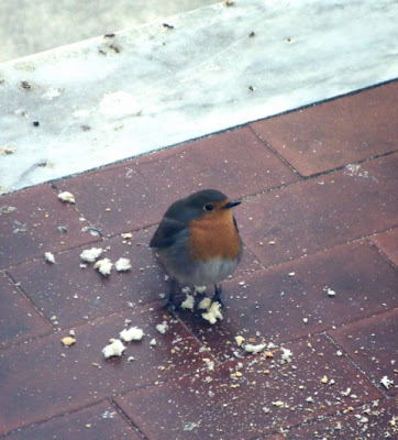 "A Robin! Maybe a ""wargamer"" robin?"