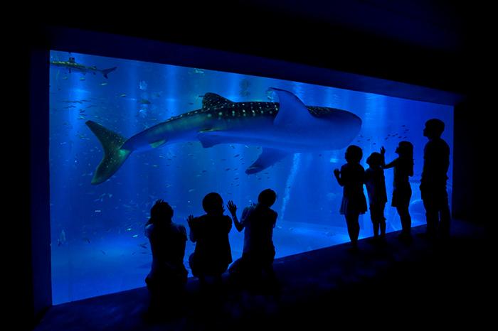 能登半島(石川県)の農家民宿ゆうか庵からのお帰りコースに能登島水族館へ. An aquarium in Notojima, ishikawa prefecture, Japan