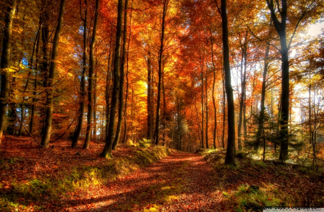 Fall Forest Path HD desktop wallpaper  High Definition