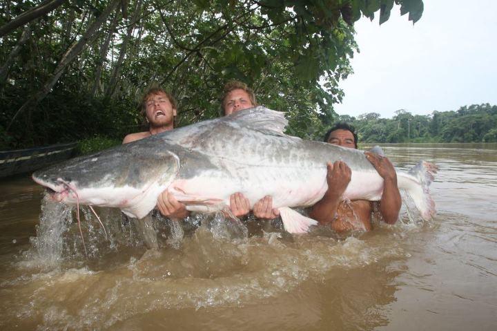 Catfish record