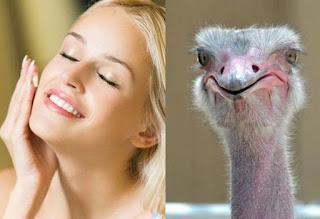 Emu Oil Benefits for Skin Repair