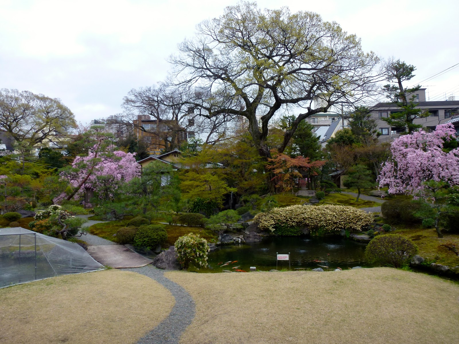 The geishas of kyoto for Typical japanese garden plants