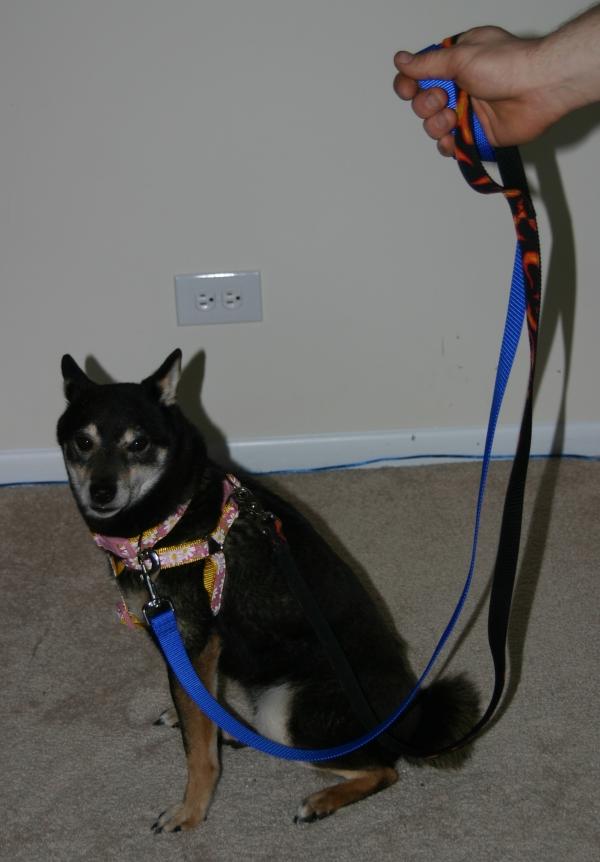 Leash Training A Fearful Dog