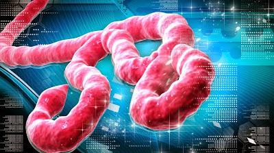 gambar virus ebola