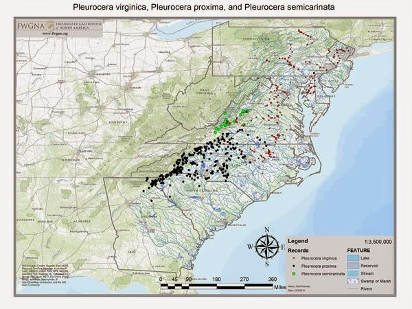Pleurocerid map