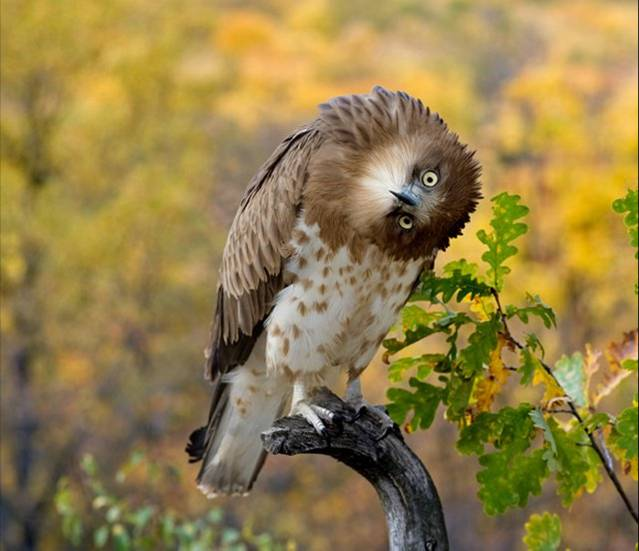 Funny+Owl