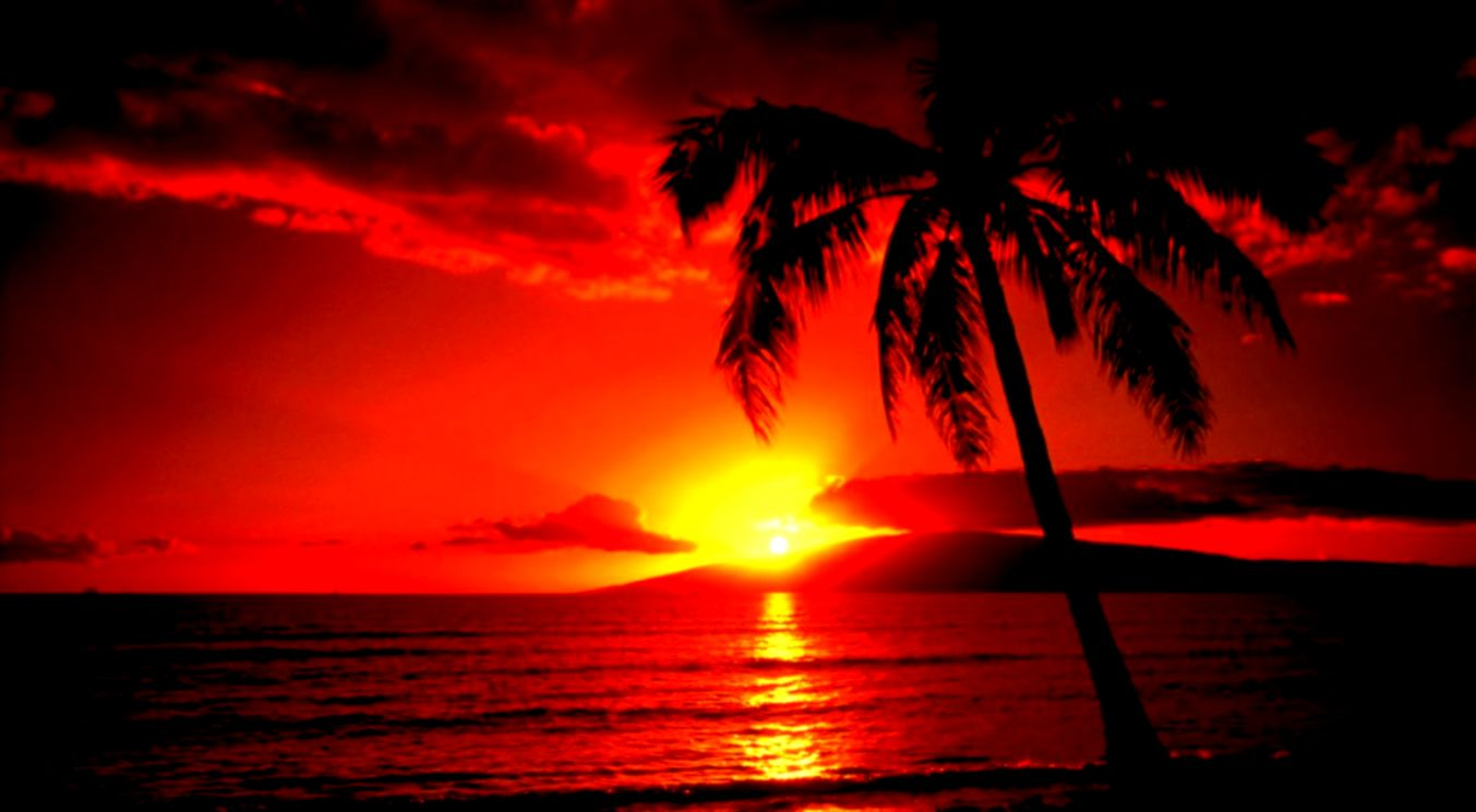 Beautiful Nature Sunset Palm Trees Creative Photography Wallpaper
