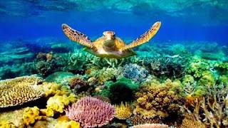 Biota Laut dan Terumbu Karang (Contoh Makalah)