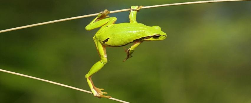 Naughty Dangerous Frog