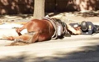 Polisi Ini Memeluk Dan Mencium Kudanya Hingga Tewas
