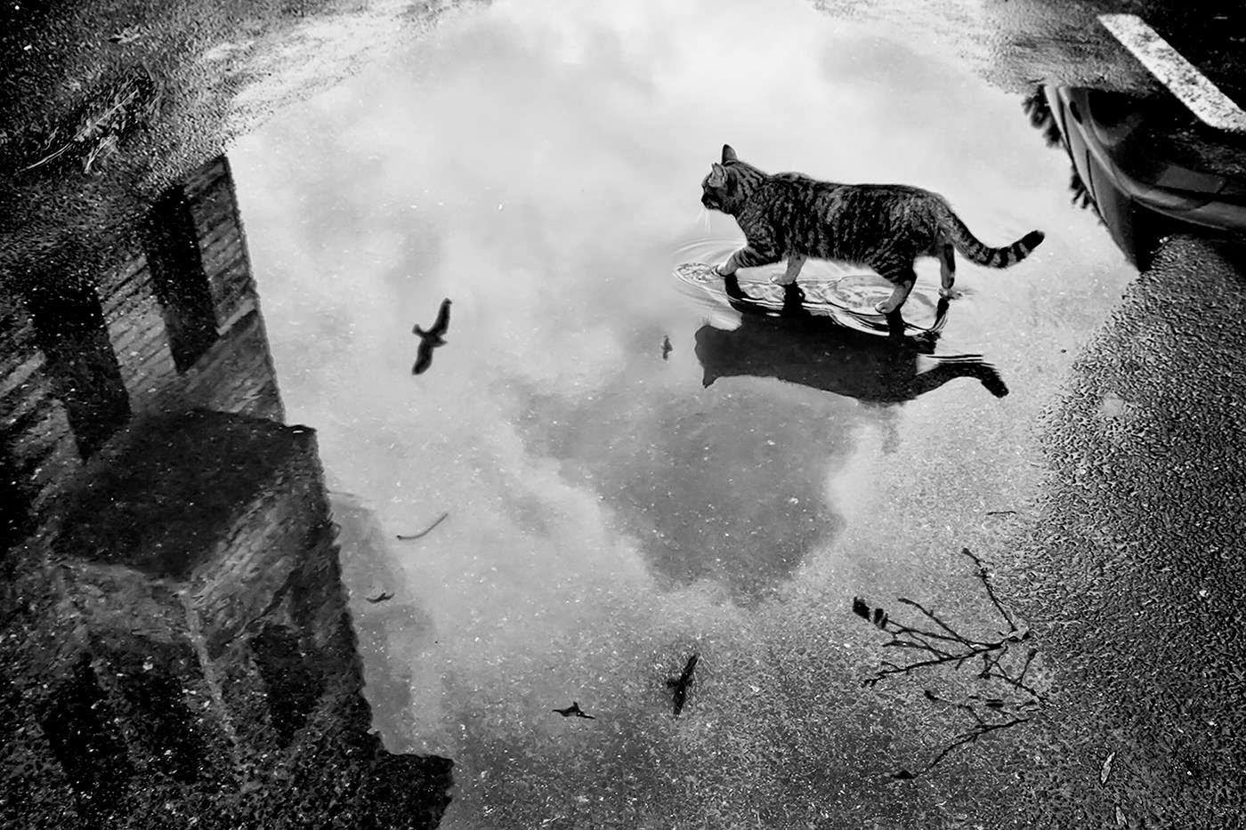 Rain Cats and Kittens Images
