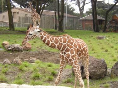 HD Animals: zoo animals  Zoo