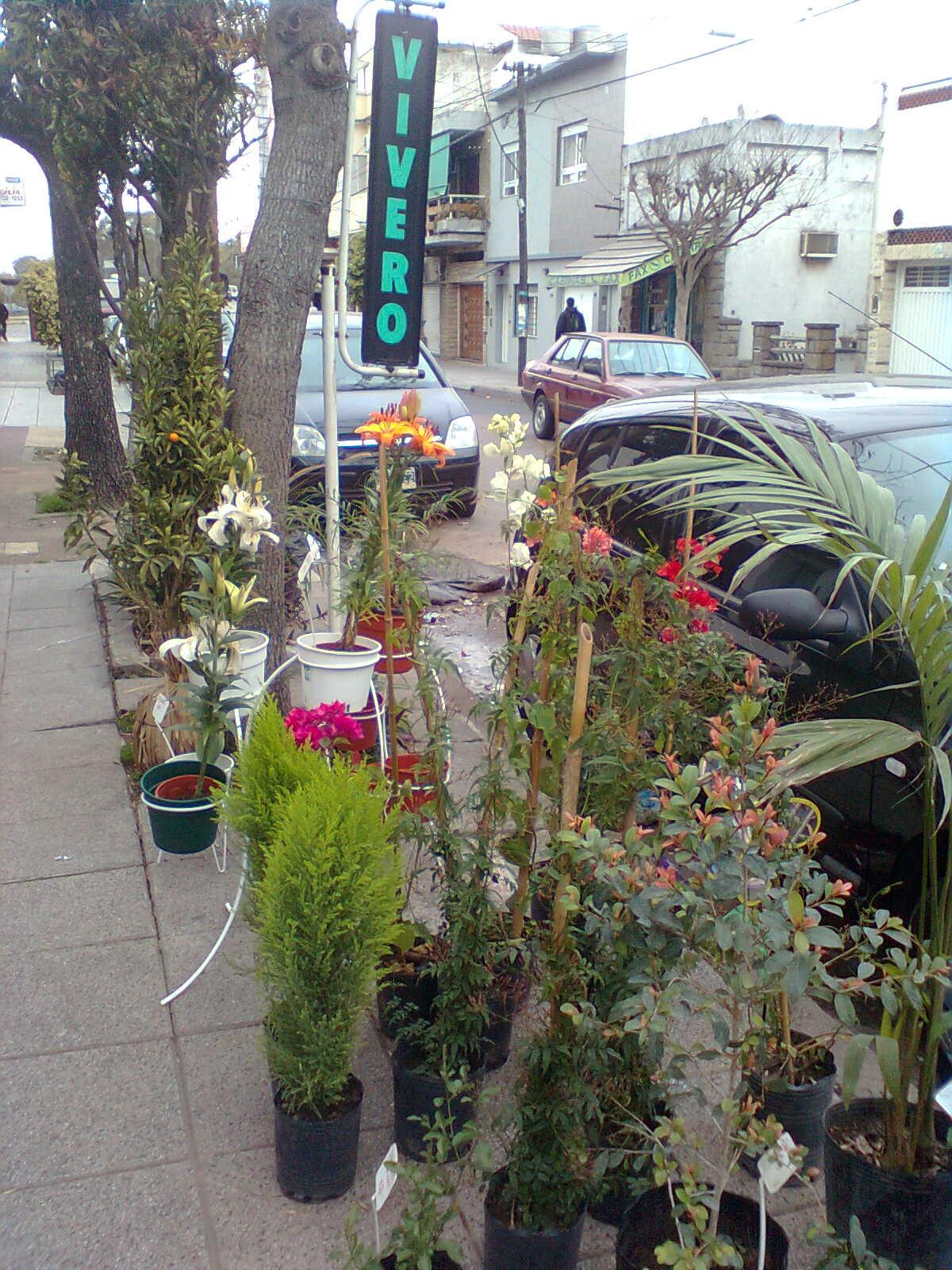 Vivero y servicio de jardineria for Servicio de jardineria
