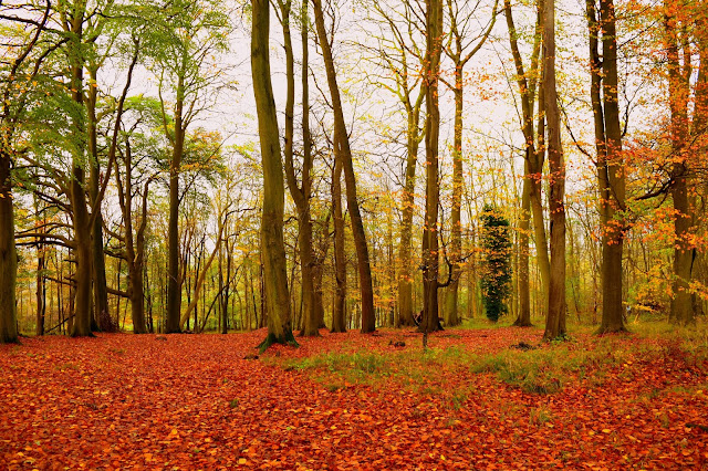 A walk in the woods- Ashridge Estate