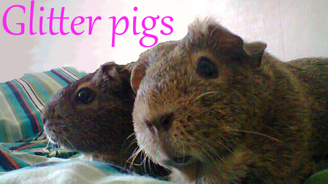 Glitter pigs